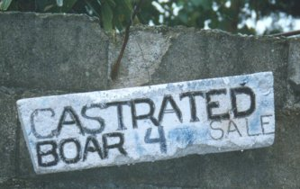 Castrated Boar